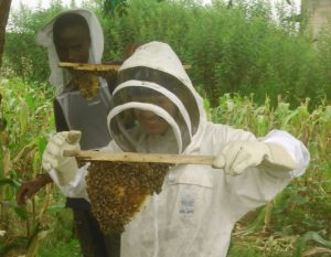 Beekeeping in Mwanza