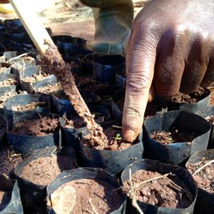 Tree nursery in Lyamgungwe